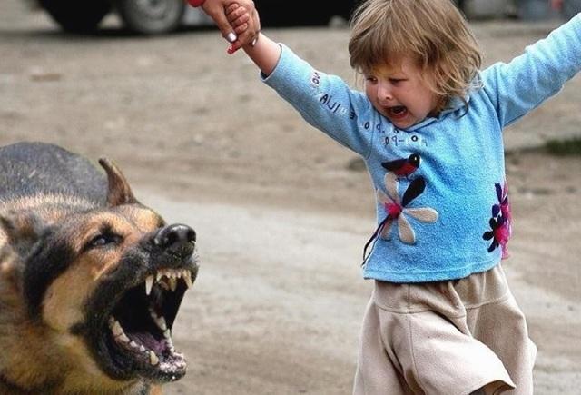 Что делать, если ребенка укусила собака: симптомы и первая помощь при собачьем укусе, фармакологические и народные средства для лечения раны, вакцинация после инцидента, ответственность для владельца животного