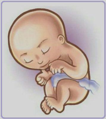 Двадцать восьмая неделя беременности: особенности развития плода и характерные изменения в организме женщины, рост и вес малыша, необходимые анализы и обследования