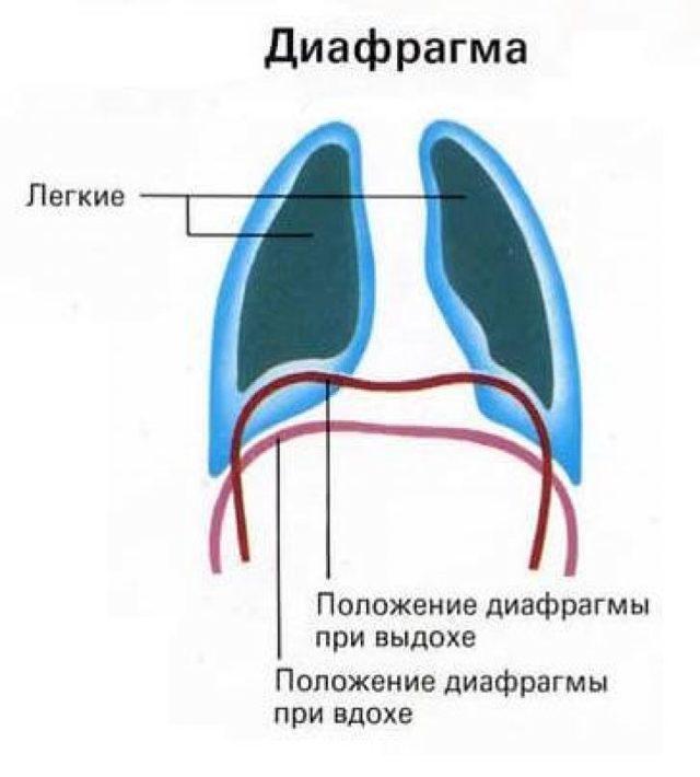 Дыхание при родах: поведение во время схваток и что делать во время потуг, примеры дыхательных упражнений и советы врачей
