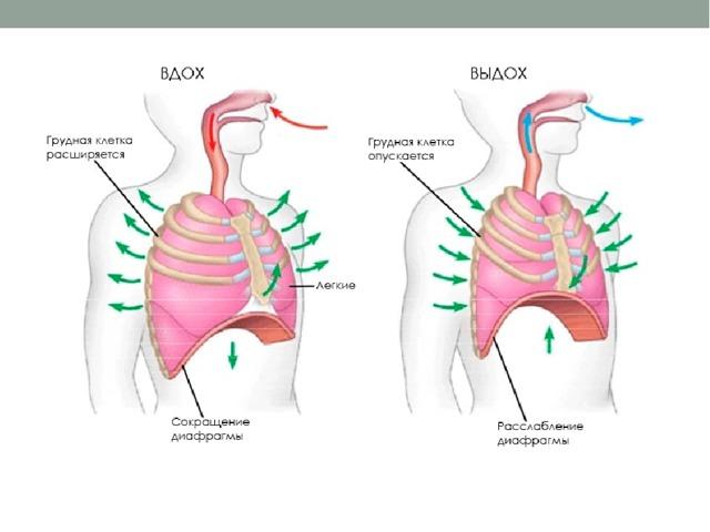 Одышка при беременности на ранних и поздних сроках: провоцирующие факторы и причины нарушения дыхания в зависимости от триместра, методы устранения патологии и меры профилактики, рекомендации специалистов
