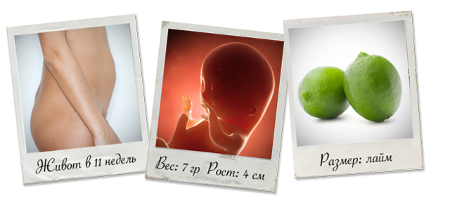 11 неделя беременности: что происходит в организме мамы и как развивается плод?