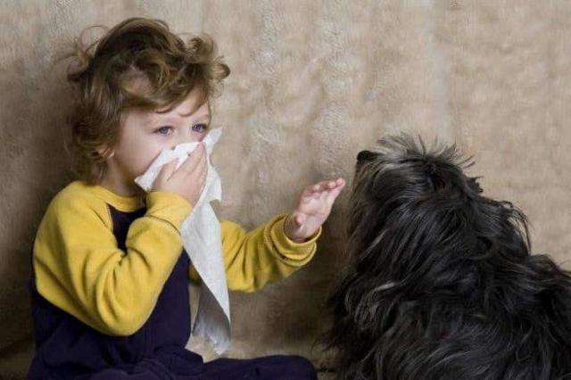 Аллергия на домашних животных: симптомы у взрослых, детей и грудничков, эффективные методы лечения
