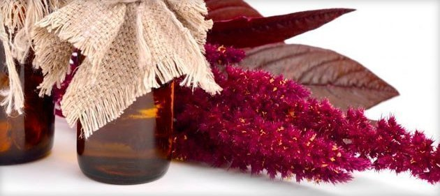 Амарантовое масло: польза и вред вещества, как приготовить и применять в домашних условиях?