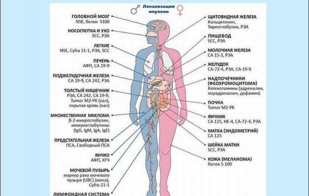 Анализ крови на онкомаркер СА 72-4: показания к исследованию, показатели нормы, причины повышения