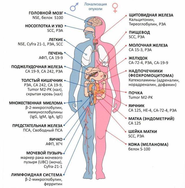 Анализ крови на онкомаркеры при раке кишечника и прямой кишки: значение исследования, подготовка к сдаче, нормы и отклонения