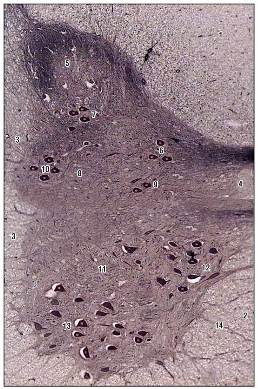 Аргироз: факторы развития заболевания, клиническая картина, лечение и возможные осложнения