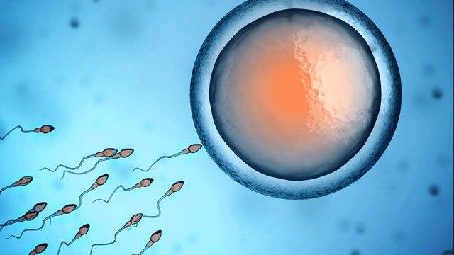 Астенозооспермия: причины и степени патологии, методы терапии, вероятность зачатия