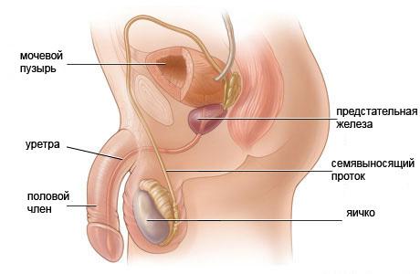 Биопсия яичка: причины назначения, подготовительные мероприятия, техника проведения, возможные последствия