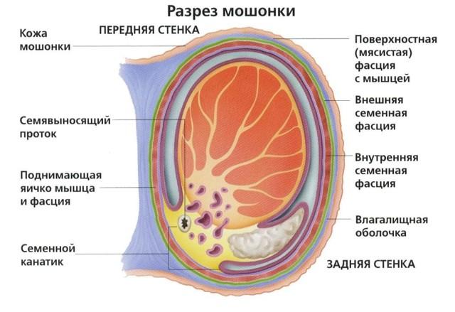 Болезнь Фурнье: причины развития, клиническая картина, диагностика и принципы лечения
