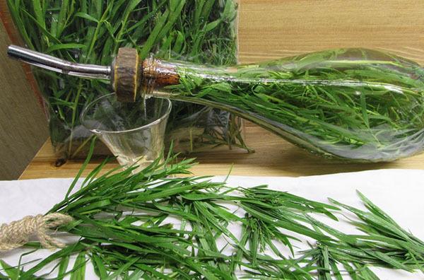 Эстрагон – полезные свойства растения, возможный вред, области применения растения