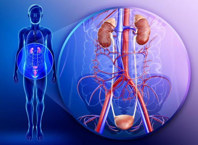 Хроническая почечная недостаточность: стадии и признаки патологии, особенности диагностики и терапии