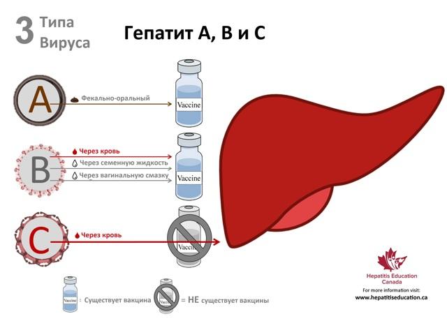 Хронический гепатит у детей: причины появления, клинические симптомы и методы лечения патологии