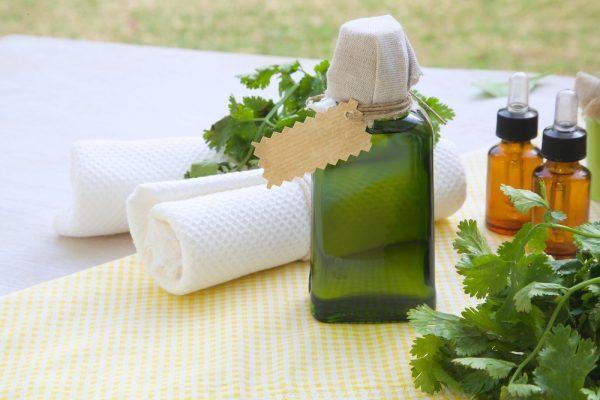 Кинза: состав, польза и вред для организма, способы и правила употребления