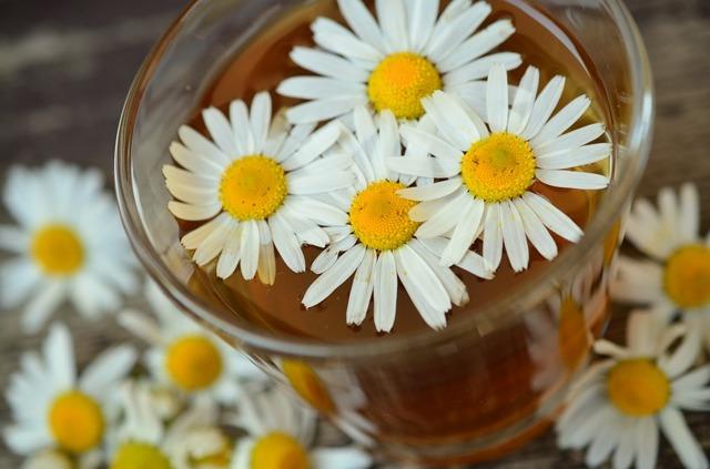 Лечение стоматита народными средствами у детей и взрослых: лучшие рецепты с алоэ, каланхоэ и прополисом