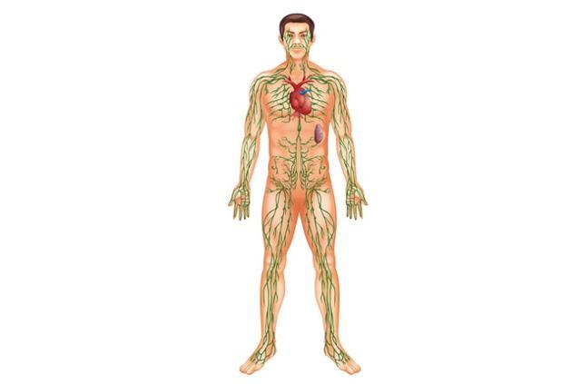 Лимфедема: классификация заболевания, клиническая картина, принципы лечения и возможные осложнения