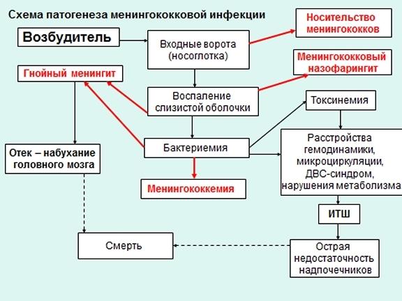 Менингококцемия: что это, специфические симптомы, диагностика и лечение патологии у детей