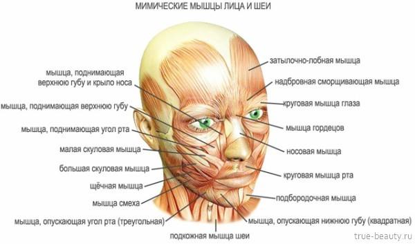 Миостимуляция лица: недостатки и преимущества методики, особенности и схема