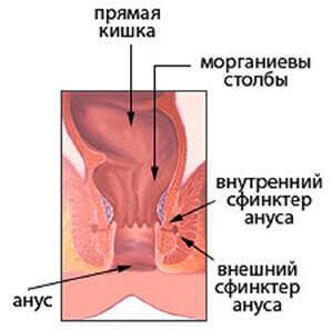 Недостаточность анального сфинктера: причины и лечение недержания кала