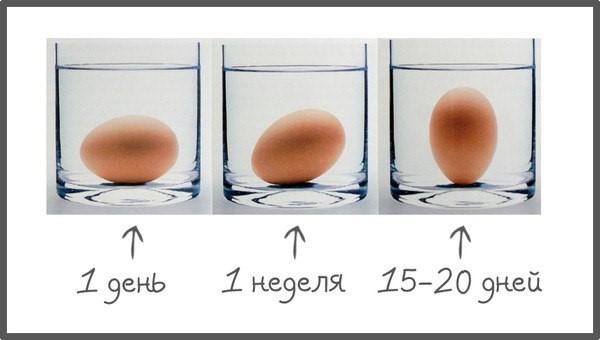 Отравления яйцами: симптомы интоксикации, правила оказания первой помощи