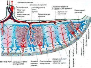 Отслойка плаценты на ранних и поздних сроках беременности: факторы риска, сопутствующие симптомы, врачебные действия и возможные последствия