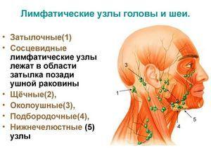 Почему при обветривании и простуде начинают болеть лимфоузлы: основные причины, возможные осложнения, лечебные и профилактические мероприятия