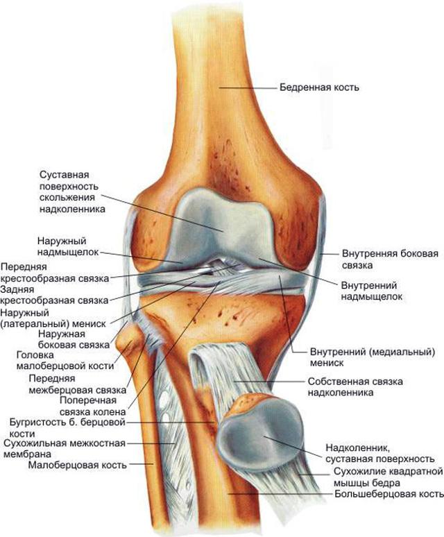Почему в состоянии покоя ноет колено, а при сгибании щелкает: диагностика заболевания