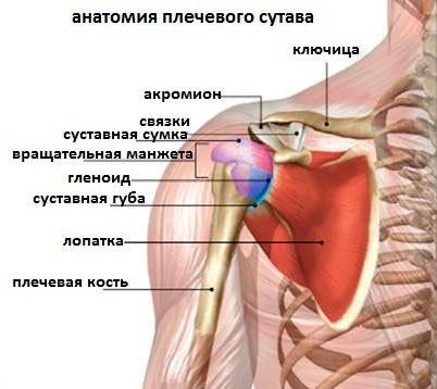 Подвывих плечевого сустава: причины и классификация повреждения, характерные симптомы, тактика лечения