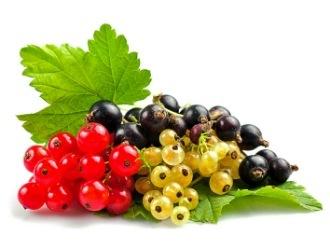 Польза черной смородины для организма: пищевая ценность и химический состав, противопоказания к употреблению ягод, применение в народной медицине