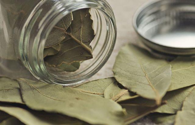 Польза и вред лаврового листа: состав и пищевая ценность, способы применения приправы в качестве лекарственного средства