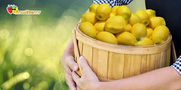Польза и вред лимона, его химический состав и применение в качестве лекарственного средства