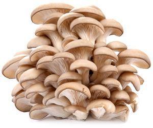 Польза и вред вешенки: химический состав и калорийность, правила выбора и хранения грибов