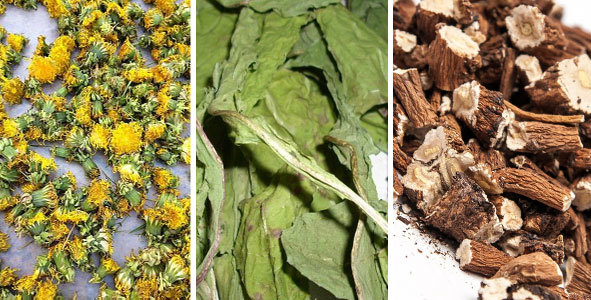Полезные свойства одуванчика, химический состав, применение растения в народной медицине