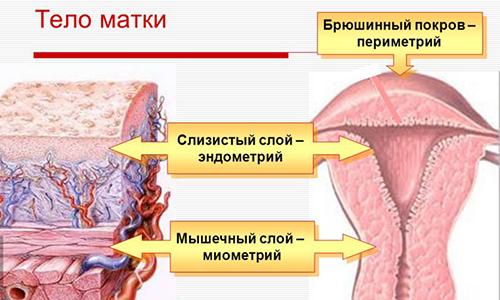 Признаки и методы лечения острого и хронического эндометрита матки