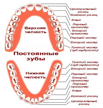 Прорезывание зубов: сроки, какие признаки скорого появления и как устранить болевые ощущения