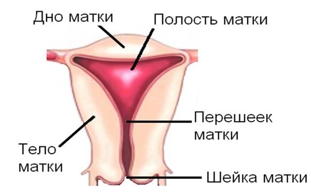 Рак матки: факторы риска, стадии развития патологии, принципы лечения и прогноз