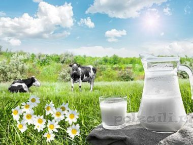 Рассольные сыры – пищевая ценность, польза и возможный вред, области применения