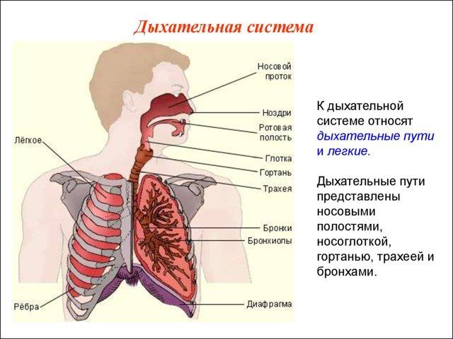 Респираторный дистресс-синдром взрослых: симптомы, методы диагностики и способы лечения