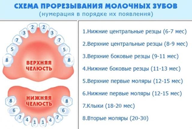 Режутся глазные зубы: основные симптомы, методы терапии, полезные советы родителям