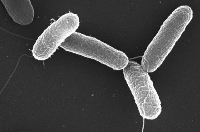 Сальмонеллез: симптомы, лечение и профилактика острой кишечной инфекции