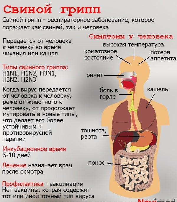 Свиной грипп: симптомы и лечение заболевания, профилактика вируса H1N1 и обзор противовирусных средств
