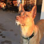 Укус собакой человека: бешенство человека после укуса собаки, симптомы после укуса собакой человека