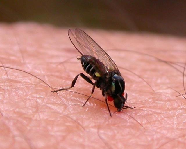 Укусы мошки и комаров у детей: как правильно снять красноту и зуд