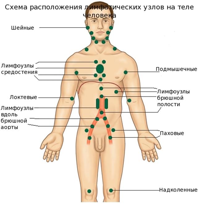 УЗИ лимфоузлов шеи, брюшной полости, подмышки и паховой области: почему назначают?