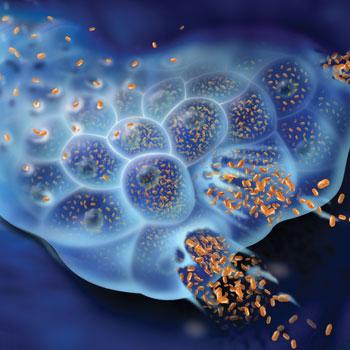 Вирусный гепатит B: источник инфекции, характерные симптомы, необходимые анализы и методы лечения