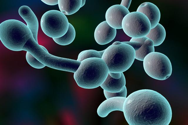 Впервые в жизни появилась молочница: факторы развития заболевания, методы лечения и профилактики