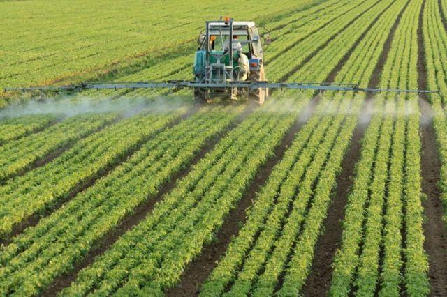 Вред пестицидов: связь между употреблением яда и развитием неврологических заболеваний