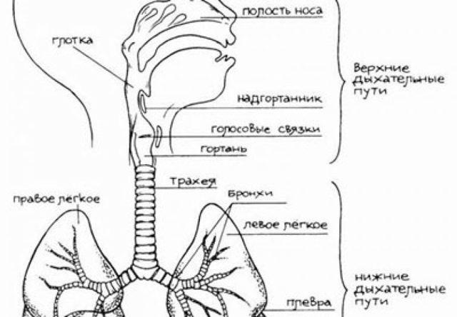 Врожденный стридор гортани: причины возникновения, характерные признаки, диагностика и лечебные мероприятия