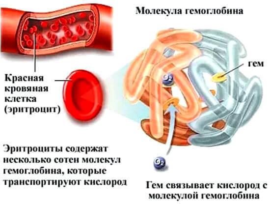 Высокие гемоглобин у женщин: почему возникает, первые симптомы, что можно есть?