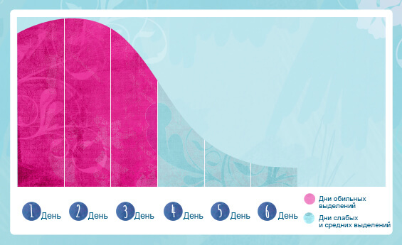 Как проходит менструальный цикл: фазы по дням