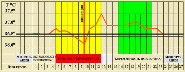 Особенности менструального цикла и его взаимосвязь с беременностью